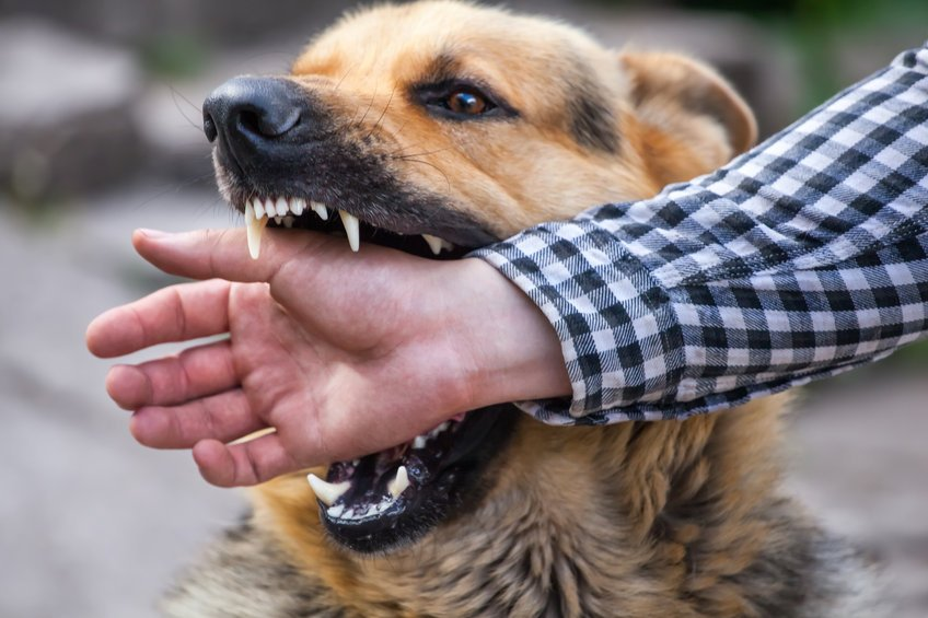 What to Do After a Dog-Bite Accident